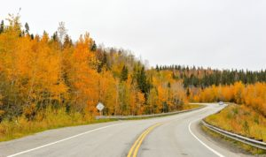 Car driving in windy road in Alaska during fall with yellow trees